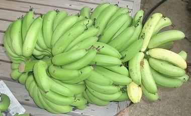 051211収穫したバナナ1.jpg