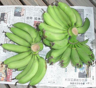 051211収穫したバナナ2.jpg