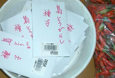 051213島唐辛子種子.jpg