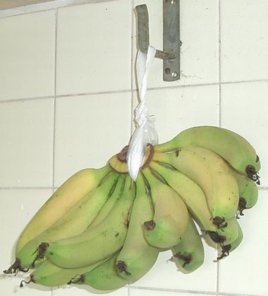 051222吊るしたバナナ.jpg