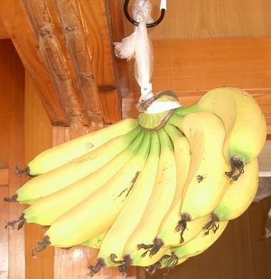 051222吊るしたバナナ1.jpg
