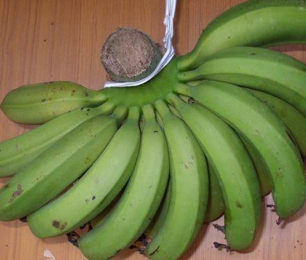 070503台湾バナナ.JPG