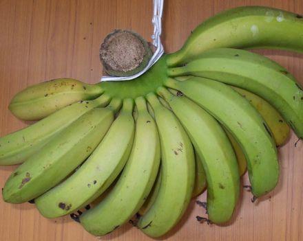 070504台湾バナナ.JPG