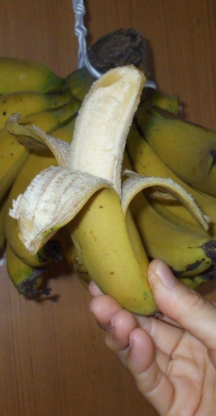 070506台湾バナナ5−5.JPG