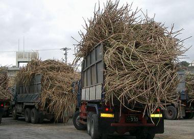 製糖工場で順番を待つトラック3.jpg