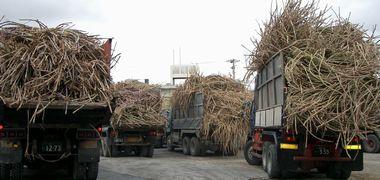 製糖工場で順番待ちのトラック2.jpg