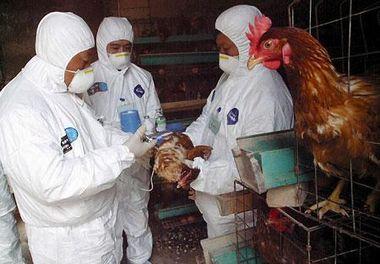 中国での鳥インフルエンザの検査.jpg