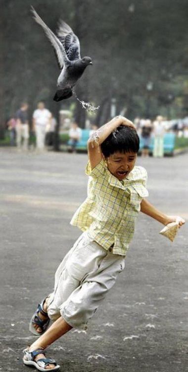 平和の象徴のハトにフンをかけられる子供.jpg