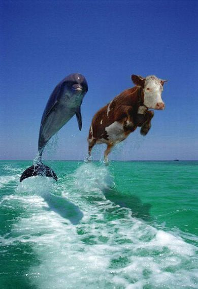 米国の牛.jpg