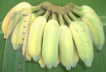 オッパイバナナ.jpg