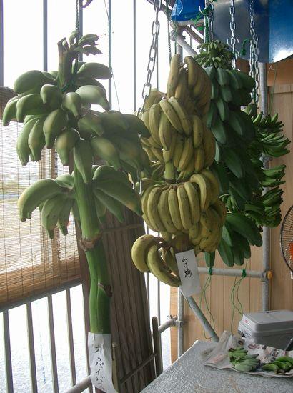 オッパイバナナ061103.jpg