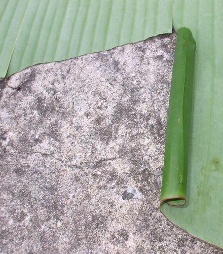 バナナセセリ2.JPG