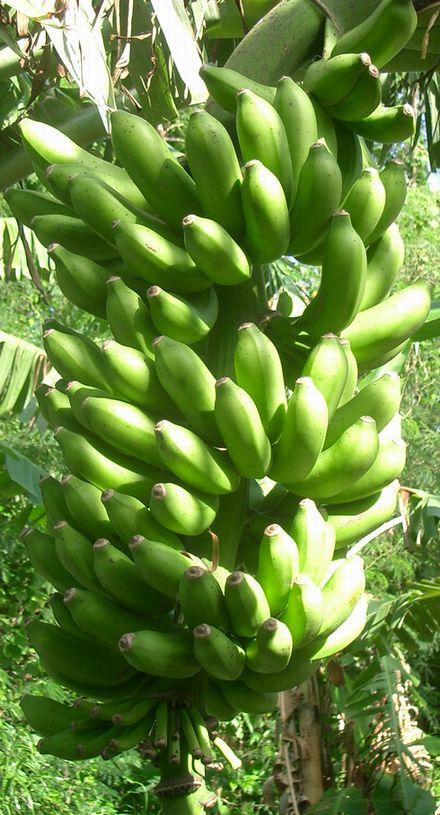 昨年のオーナー様のバナナ画像2.jpg