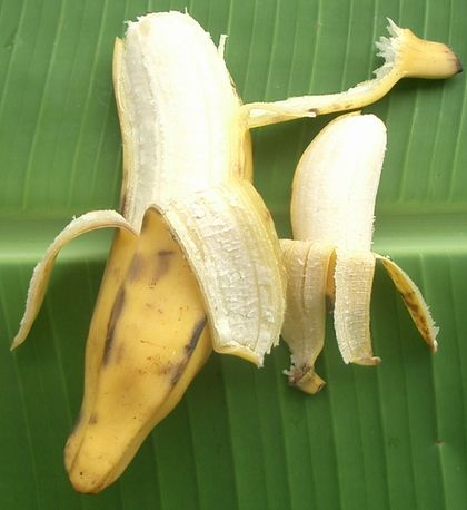 八重山バナナと島バナナ061101.jpg